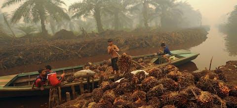 Palmolieplantage