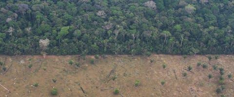 Illegale ontbossing in gebied van de inheemse Uru-Eu-Wau-Wau in Brazilie