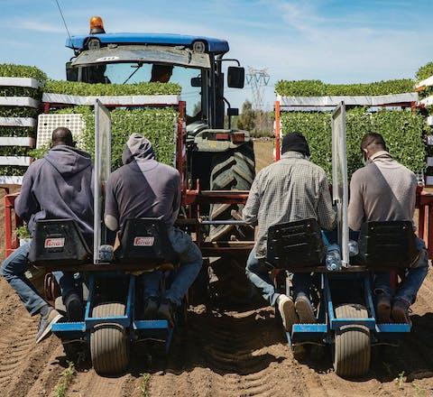 Seizoensarbeiders op een tractor. Tussen hen in een paneel tegen de verspreiding van het virus.