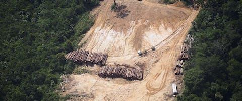 Door massale houtkap in Brazilië zijn er minder bomen die CO2 uit de atmosfeer kunnen halen